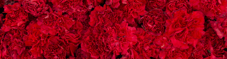 Ohio state flower